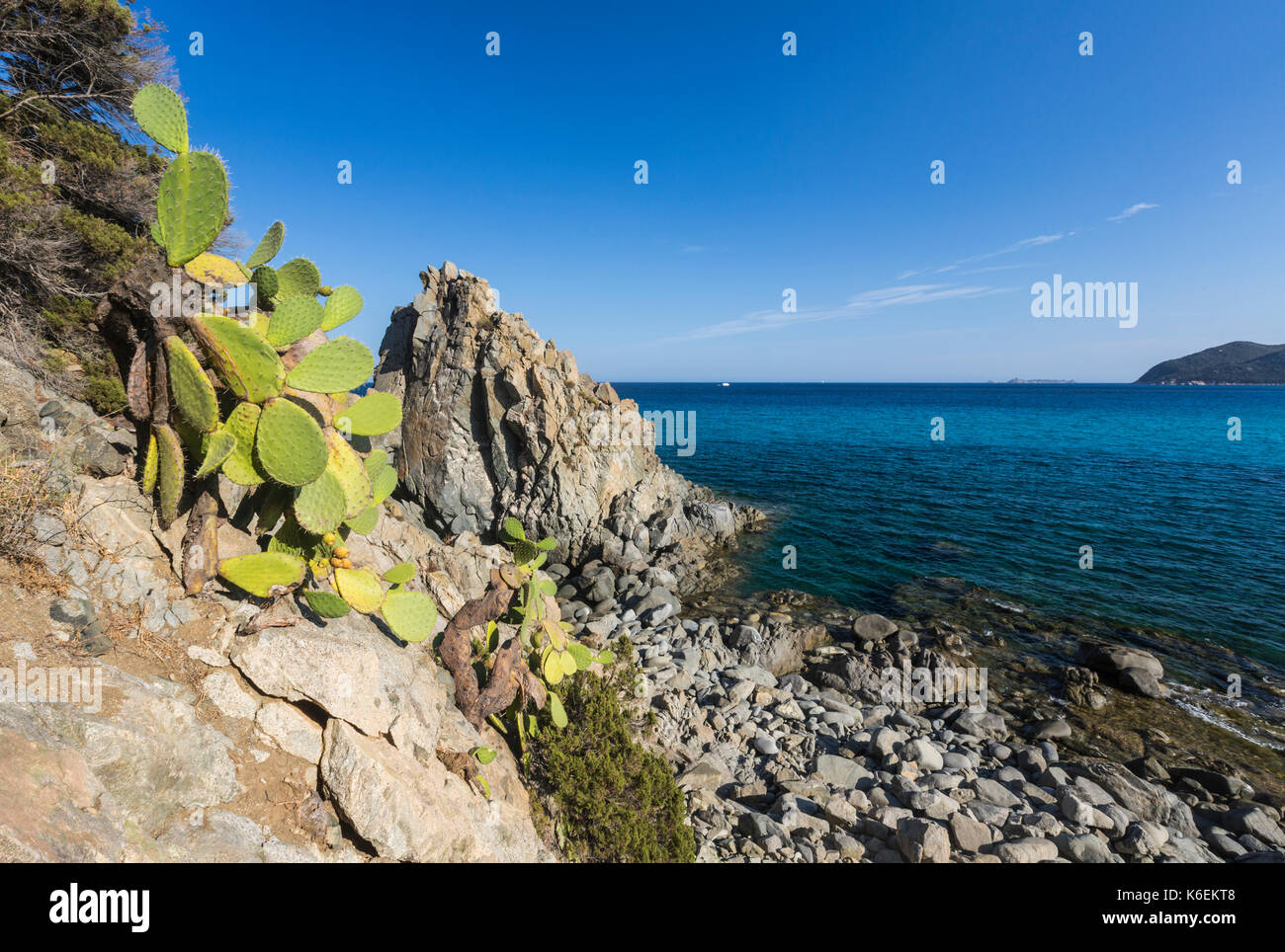 Prickly pears on the cliffs surround the blue sea of Cala Monte Turno Castiadas Cagliari Sardinia Italy Europe - Stock Image