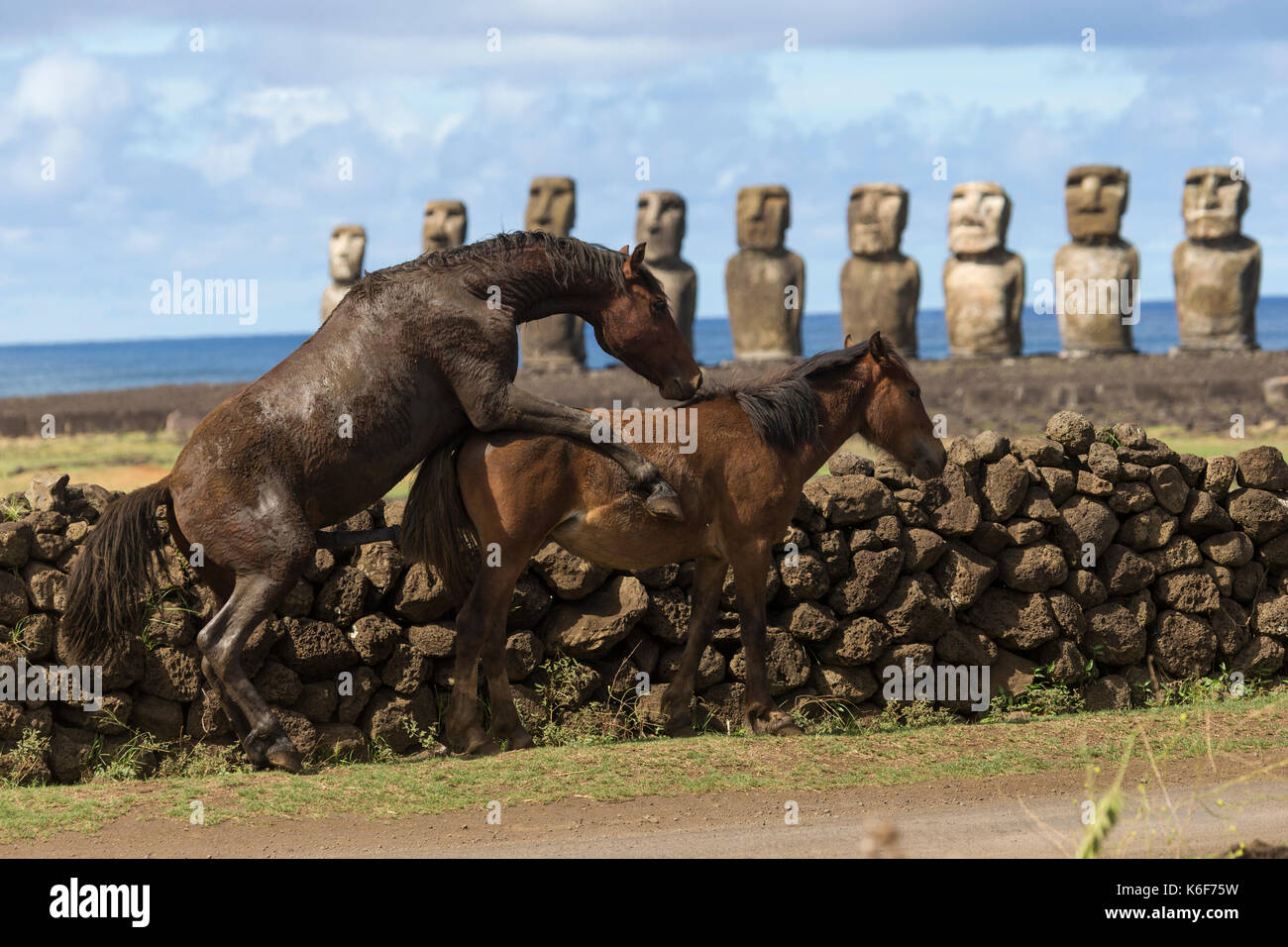 Wild horses on Easter Island, Chile - Stock Image