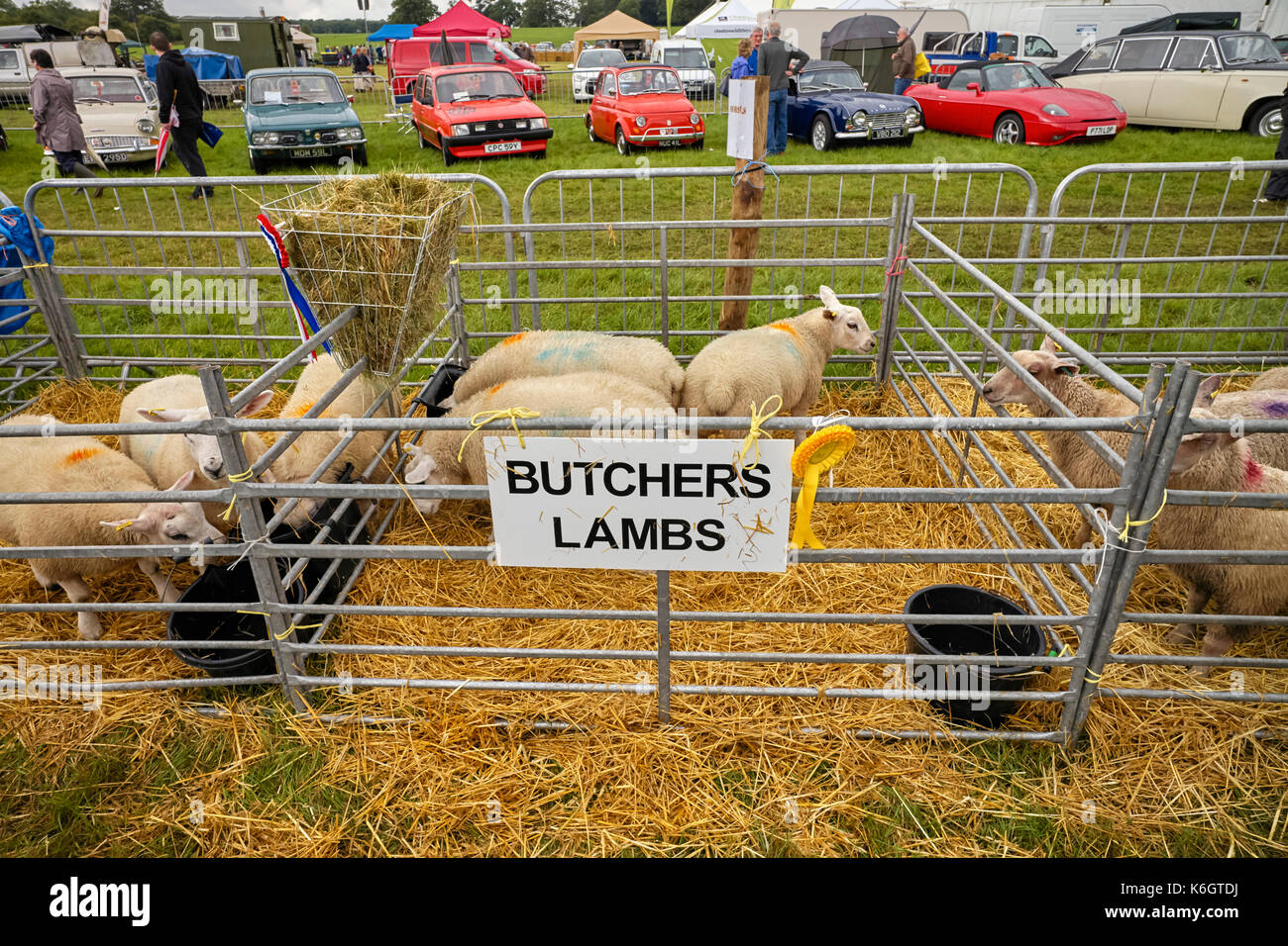 Butchers Lambs at Nantwich show - Stock Image
