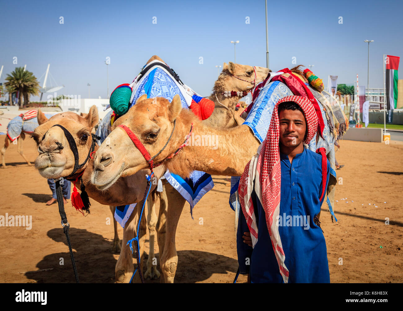 Dubai, United Arab Emirates - March 25, 2016: Camel handler with the animals at Dubai Camel Racing Club - Stock Image