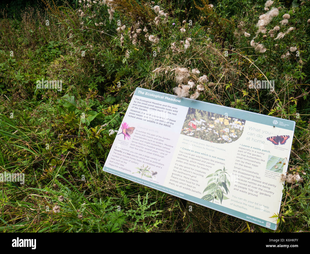 The Ecological Meadow, Royal Botanic Garden Edinburgh, Edinburgh, Scotland - Stock Image
