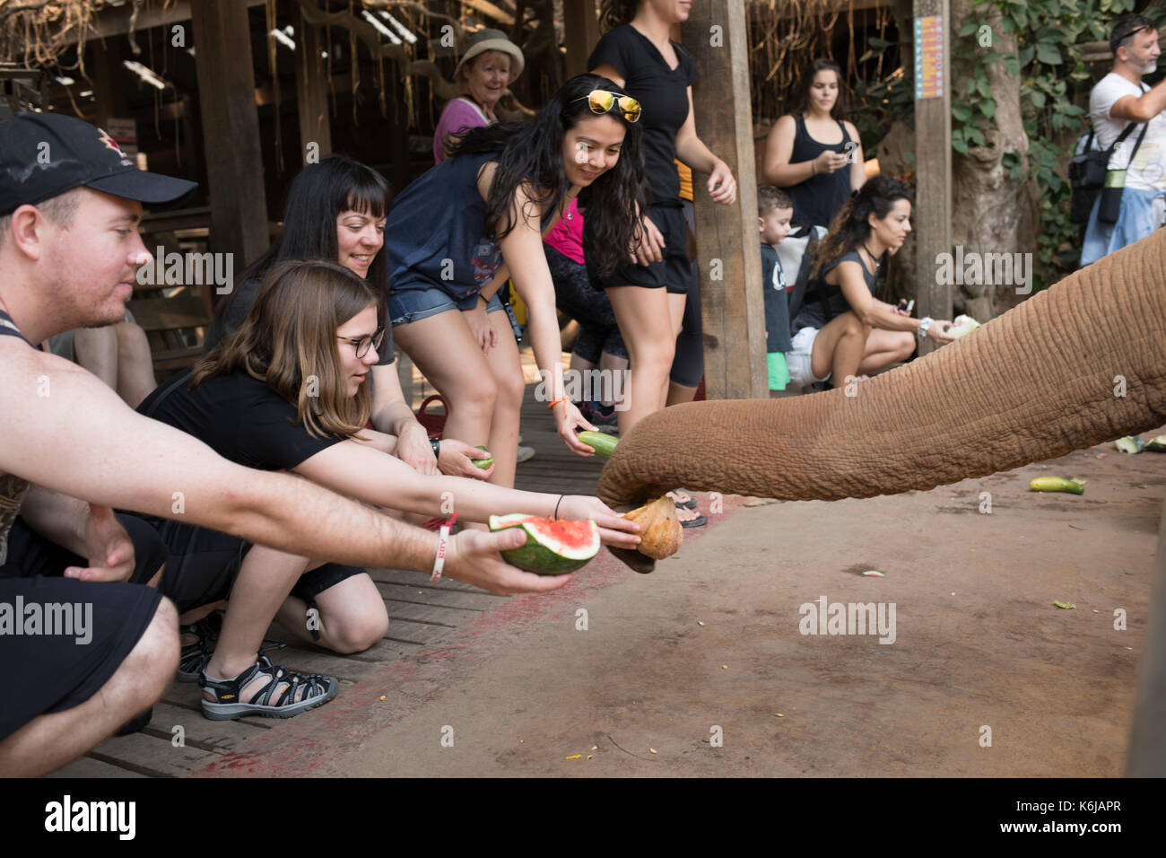 Visitors holding out fruits and squashing for elephants to take, Chiang Mai, Thailand - Stock Image