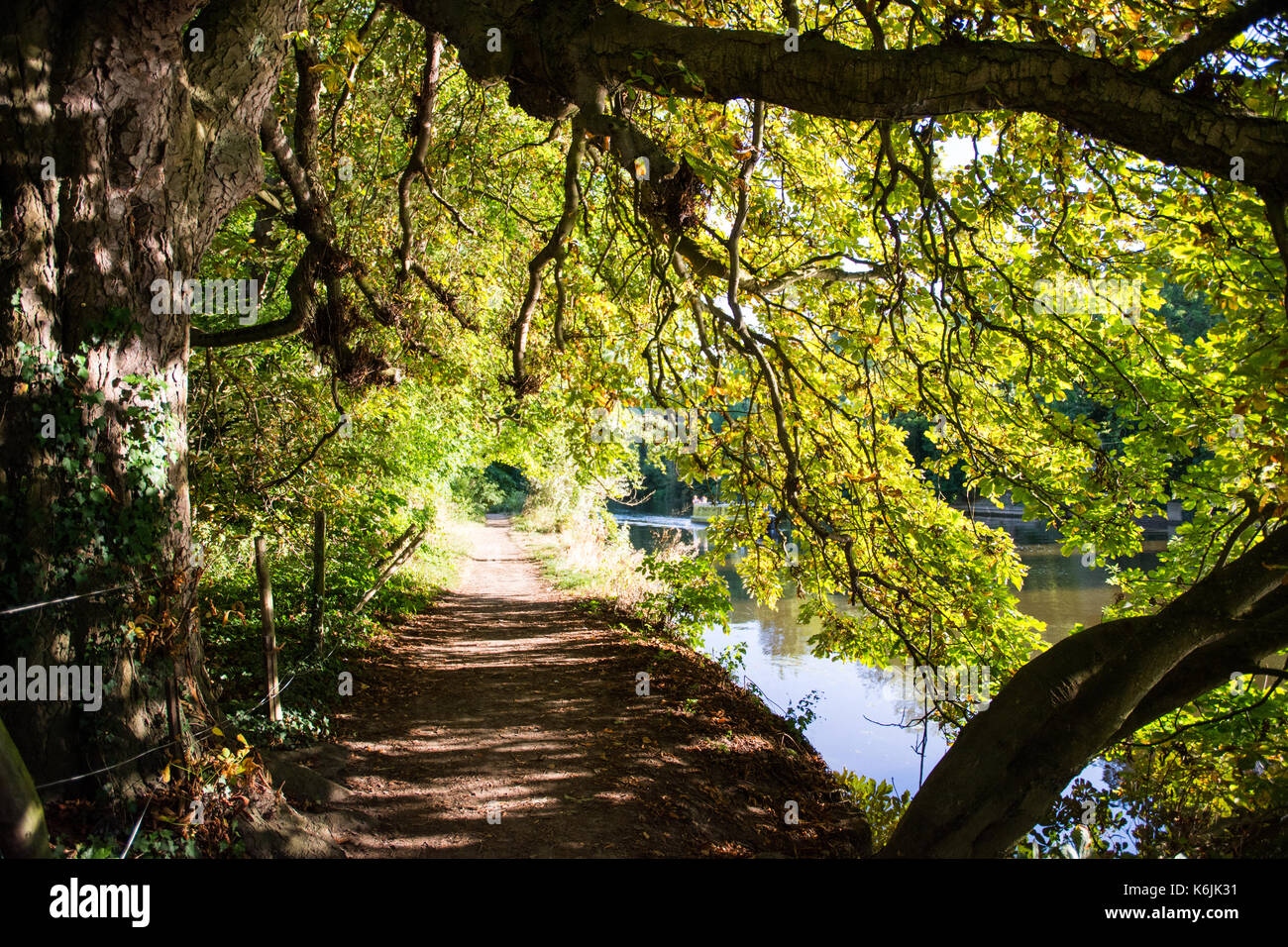 The Thames footpath alongside the meandering River Thames in the flood plains of Goring, up river from Reading in - Stock Image