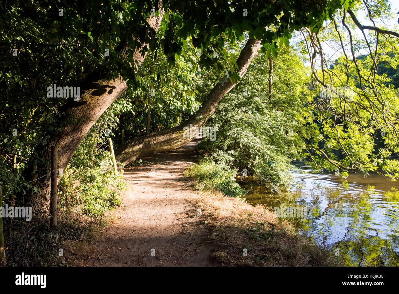 The Thames footpath alongside the meandering River Thames in the flood plains of Goring, up river from Reading in Berkshire. - Stock Image