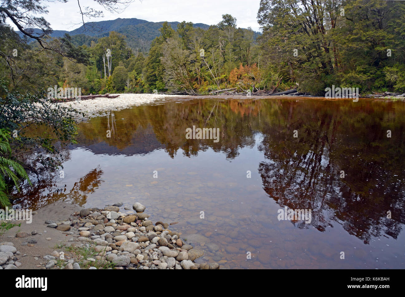Reflections in the water of the Oparara River near Karamea, West Coast  New Zealand. Note the amazing golden brown Stock Photo