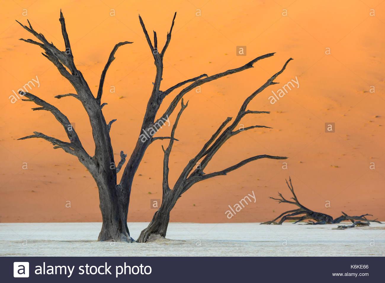 Sossusvlei, Namib Naukluft National Park, Namibia - Stock Image