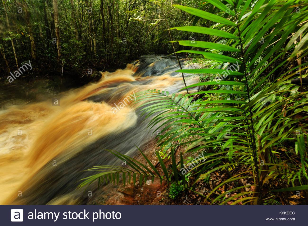 Jau National Park, Amazonas, Brazil - Stock Image