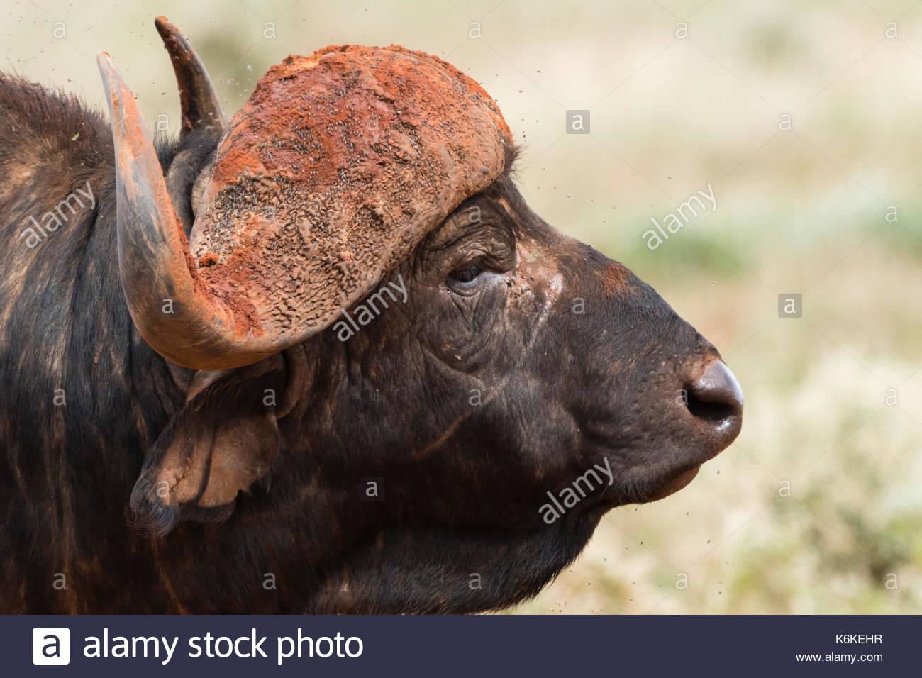 Voi, Tsavo National Park, Kenya. - Stock Image