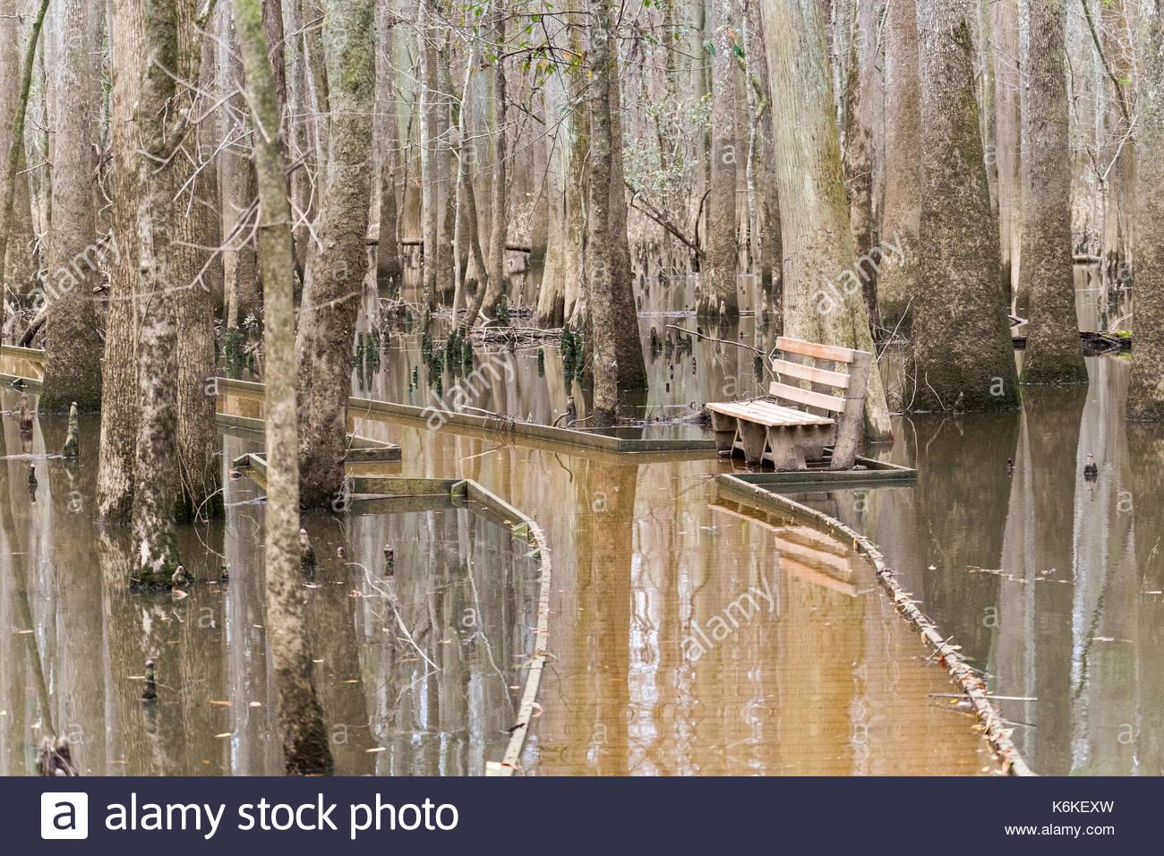 Hopkins, Congaree National Park, South Carolina, United States of America - Stock Image