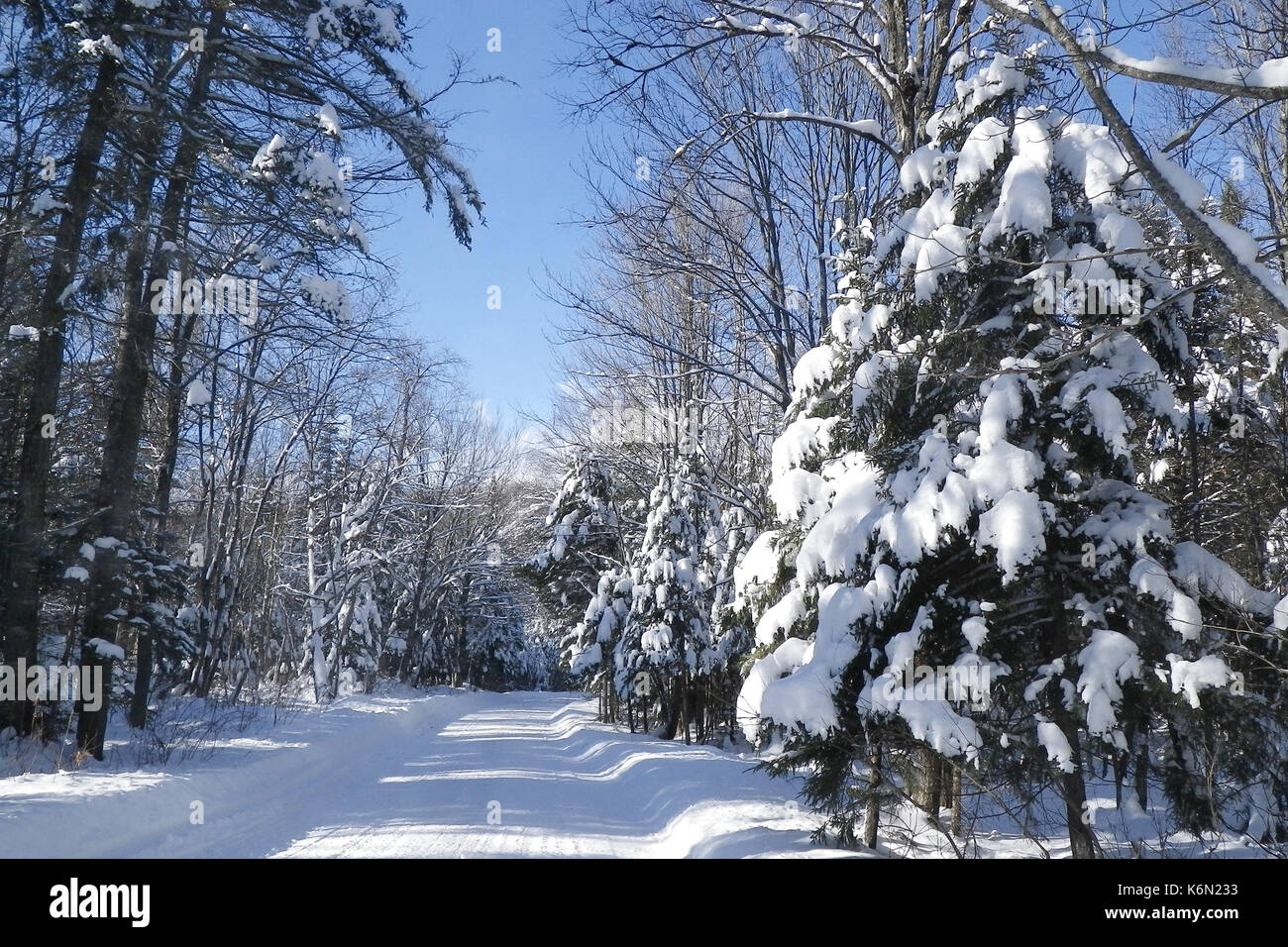 Snowmobile trail in the Adirondack Park, NY wilderness. - Stock Image