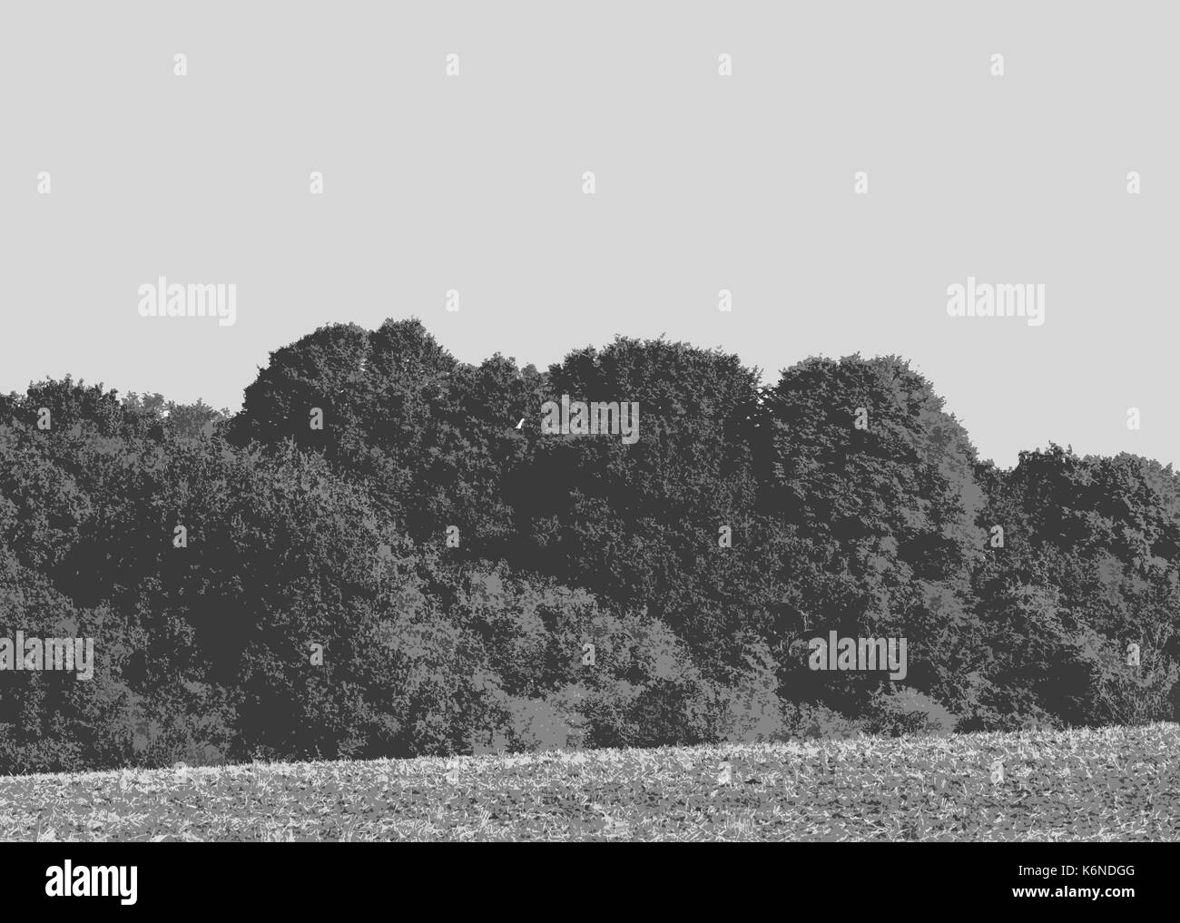 Piles Copse - a Woodland Trust Woodland near Coventry - Stock Image