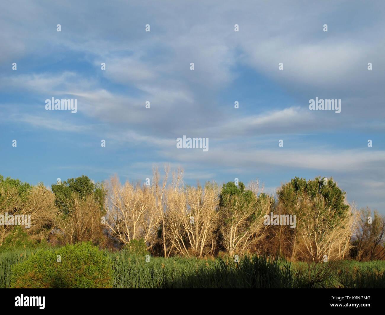Clark County Wetlands Park, Las Vegas, Nevada - Stock Image