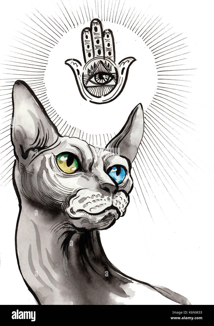 Sphinx Cat Stock Photos & Sphinx Cat Stock Images - Alamy