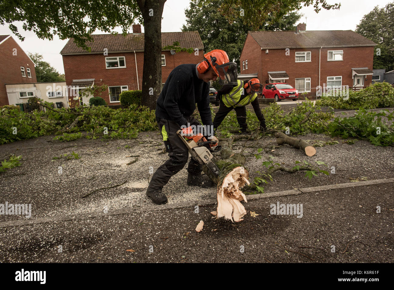 Cardiff, UK. 13th Sep, 2017. 17-09-13 . Cardiff, Wales, UK. Storm Aileen, the first named storm of the 2017-2018 season downs trees across the Welsh capital, Cardiff causing roads to close as in here in Aberporth Road, Mynachdy where a cutting and clear up crew is busy clearing. Picture Credit: IAN HOMER/Alamy Live News - Stock Image