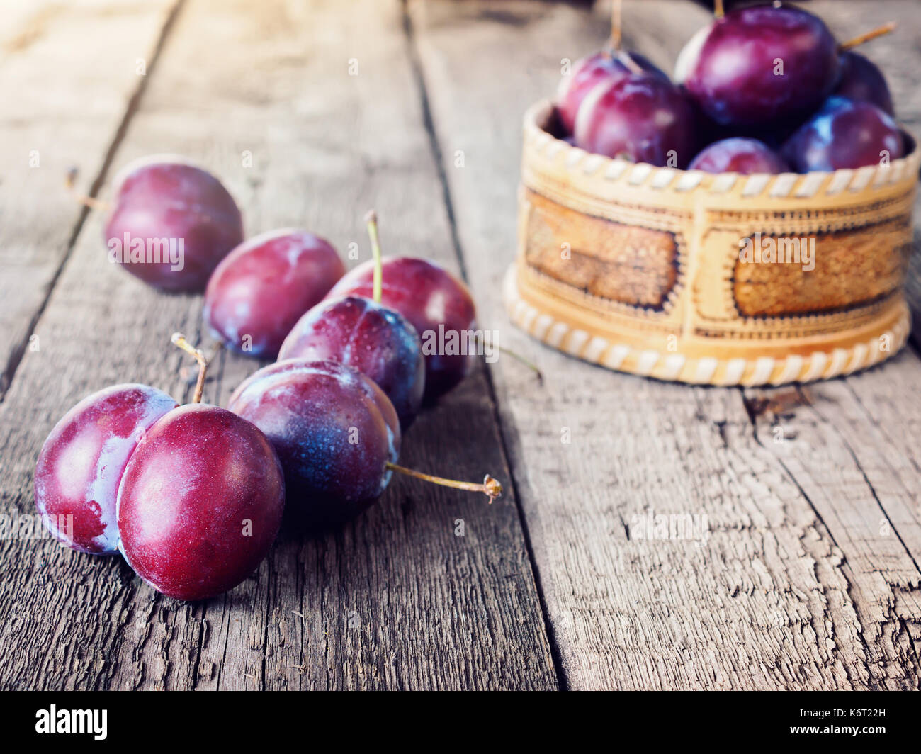 Fresh ripe plum prunes crop harvest - Stock Image