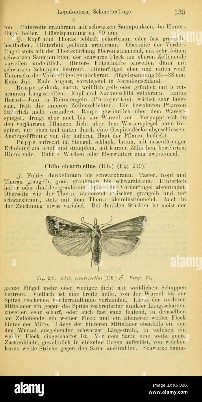 Ephemerida, Plecoptera, Lepidoptera (Page 135) BHL8222815 - Stock Image