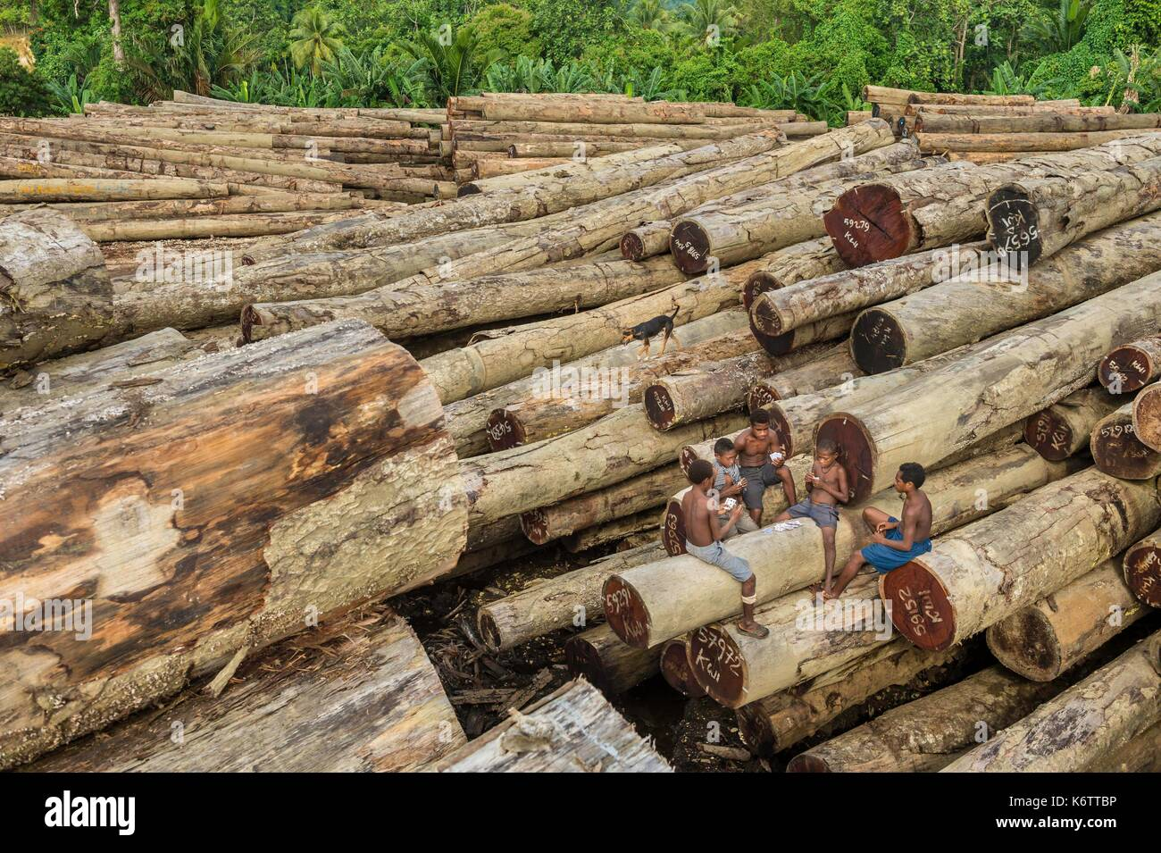 Papua New Guinea, Vanimo province, kids playing in the middle of timbers (Intsia bijuga) ready to be exported - Stock Image