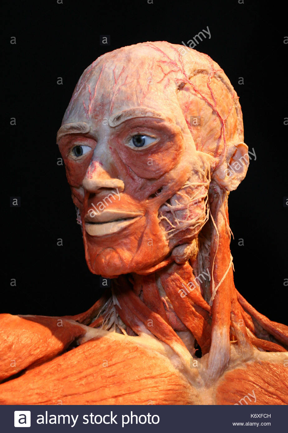Body statue. Dr Gunther von Hagens, the famous anatomist, introduces ...