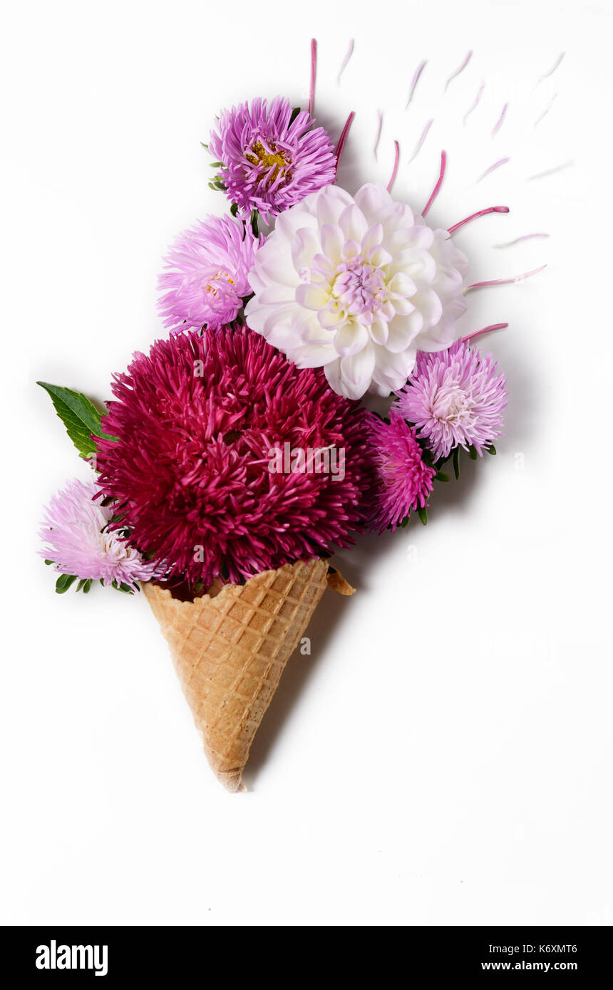 Cream Chrysanthemum Stock Photos & Cream Chrysanthemum Stock Images ...