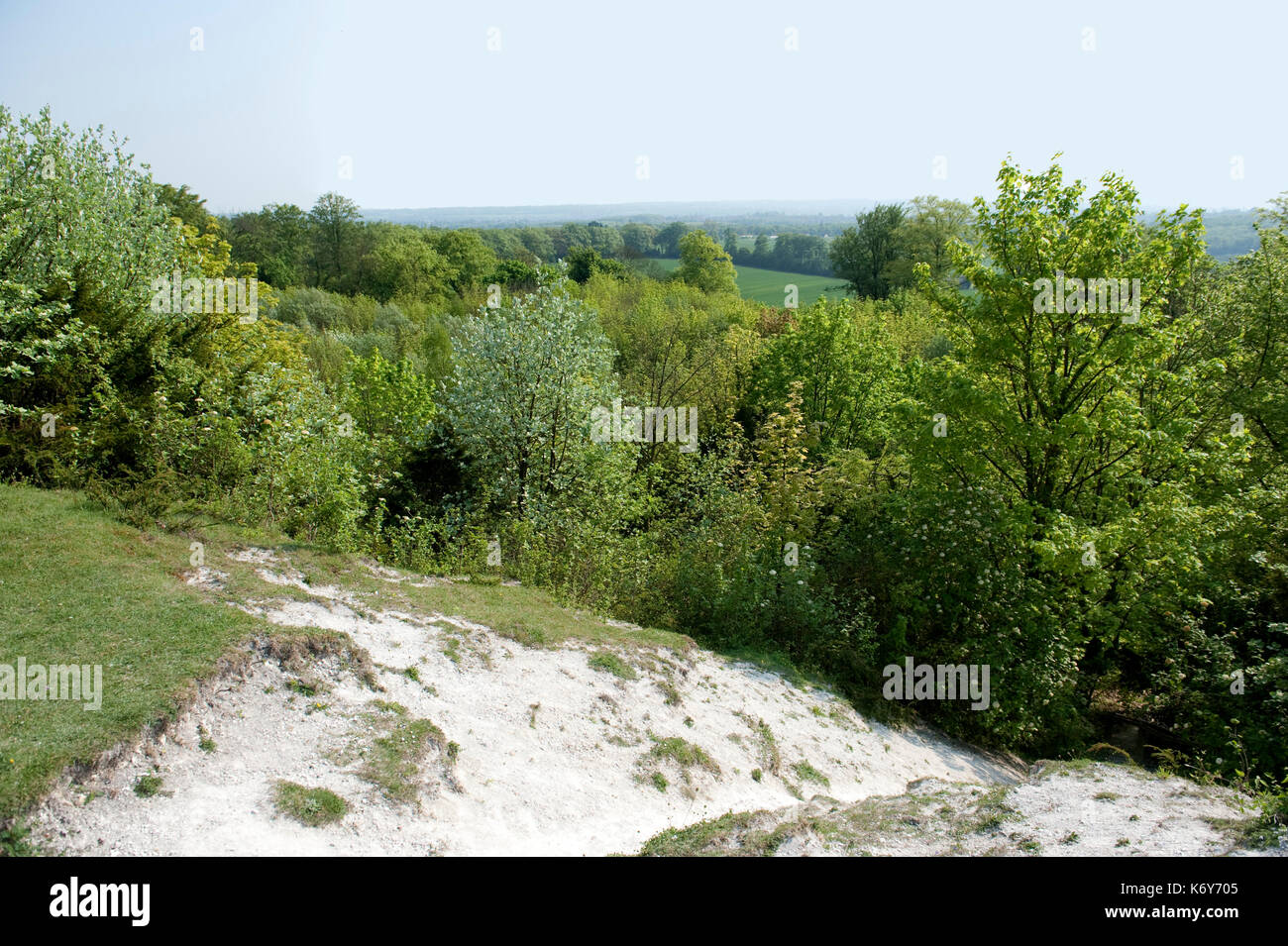 view of The Larches, Kent Wildlife Trust, UK - Stock Image