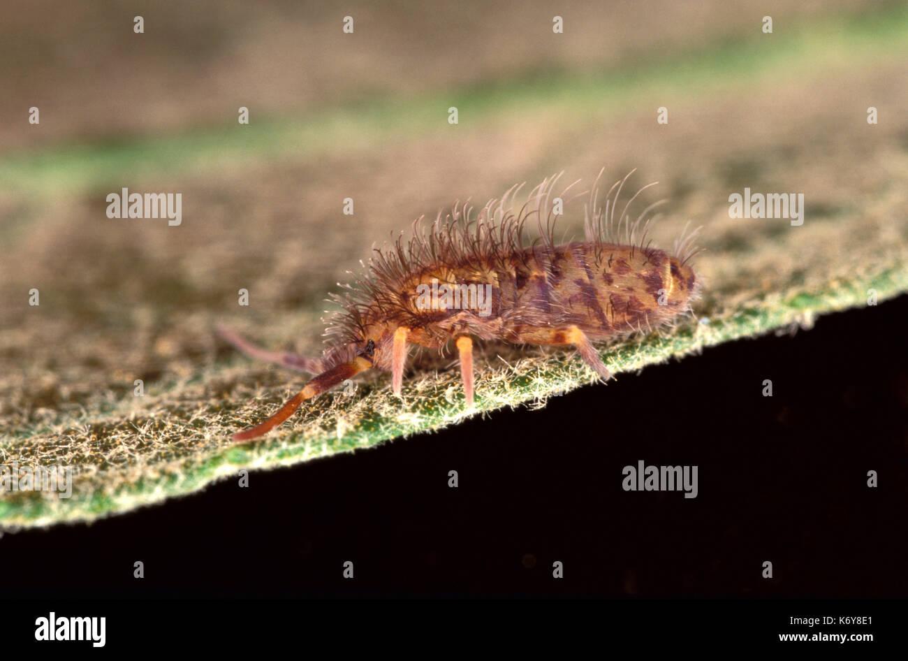 Hexapod Invertebrates Stock Photos & Hexapod Invertebrates