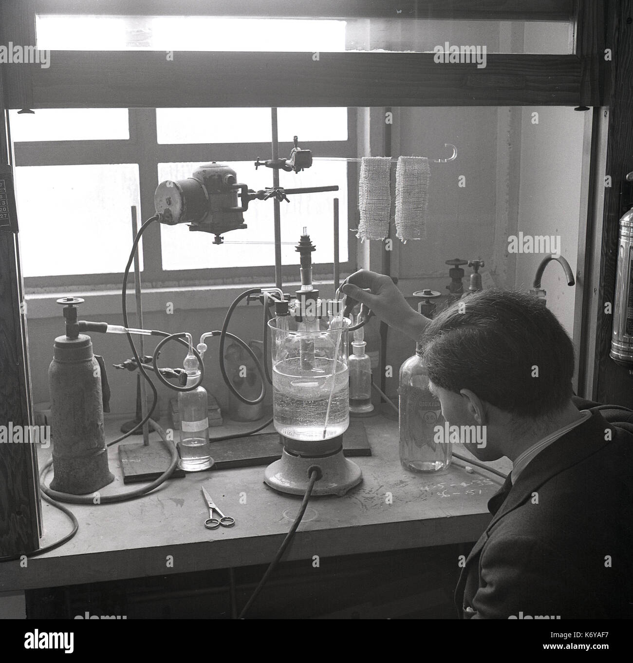 1950s, historical picture showing a young university lab researcher working on the ways different chemicals affect the physical properties of the natural fibre of jute, Leeds University, Leeds, England, UK. - Stock Image