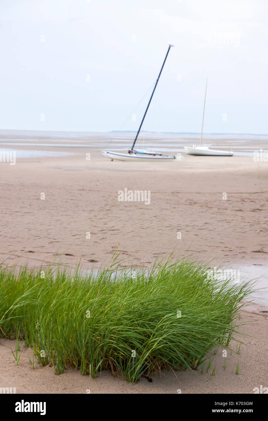 Sailboats grounded in the sand at low tide with seagrass in the foreground.  Eastham, Massachusetts, Cape Cod, USA. - Stock Image