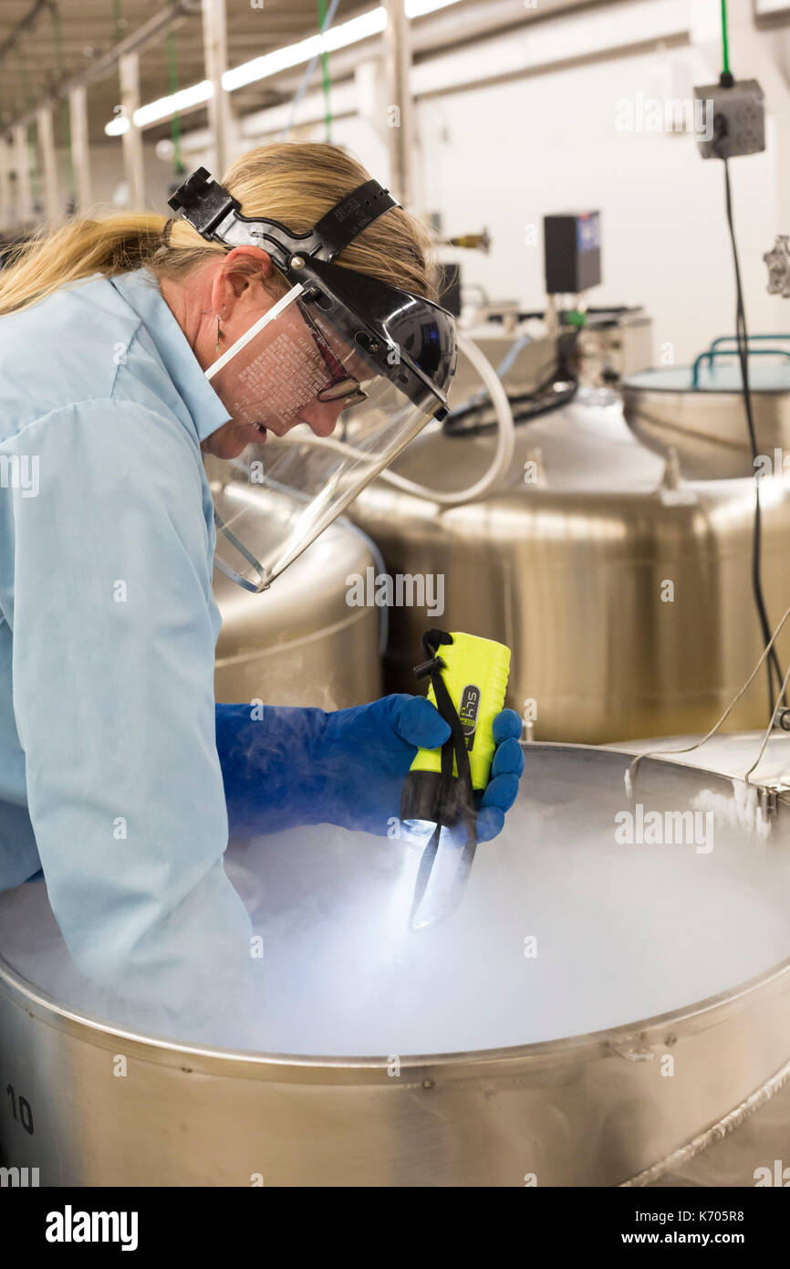 Fort Collins, Colorado - Amy Gurza, a biological science technician, inspects the contents of a tank of liquid nitrogen that stores seeds and other ge - Stock Image
