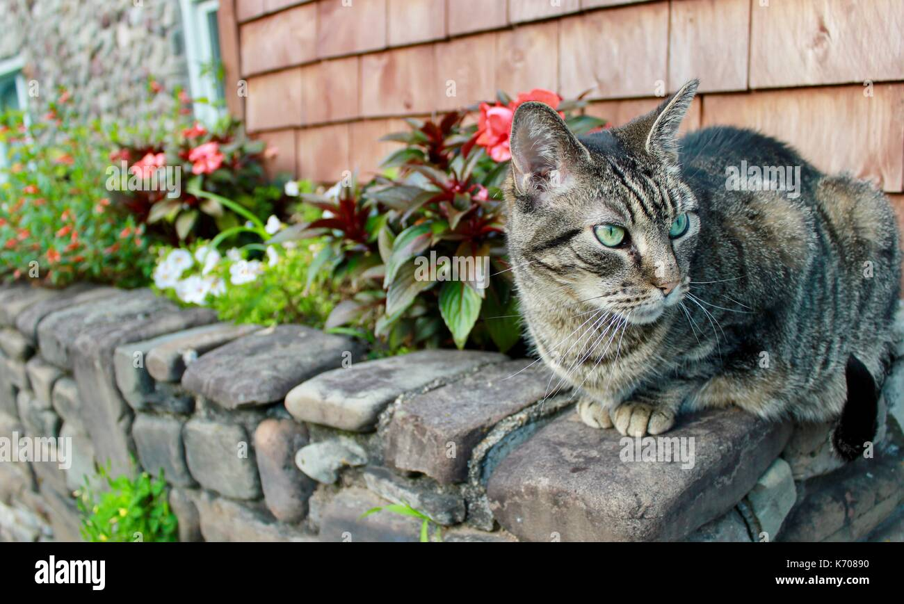 A pet cat perched on a stone wall, staring with big green eyes. Stock Photo