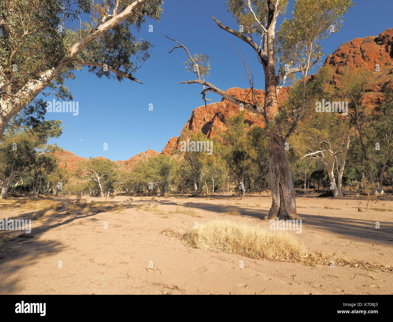 Dry sandy river bed of Trephina river near Trephina Gorge, east MacDonnell ranges near Alice Springs, Northern Territory, Australia 2017 - Stock Image