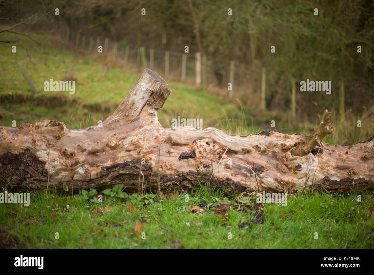 Fallen ancient tree in a field Stock Photo