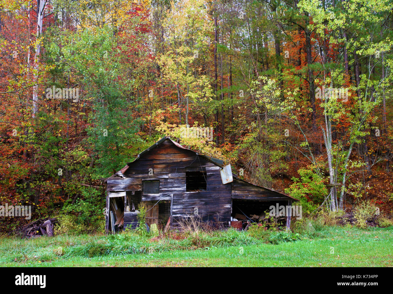 A view of  an old wooden barn surrounded by colorful trees in the middle of fall in Georgia, USA - Stock Image