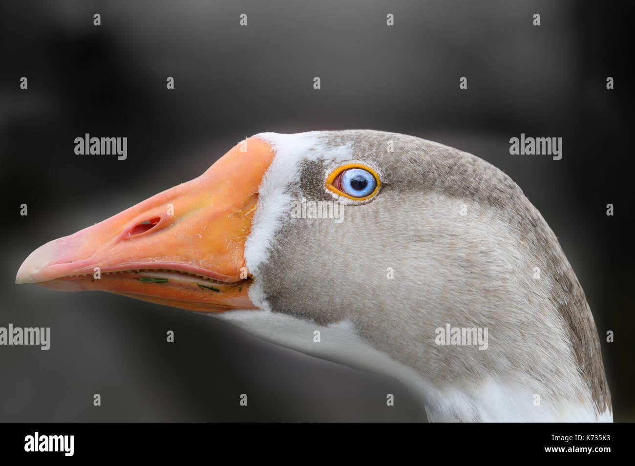 Uneasy - Stock Image