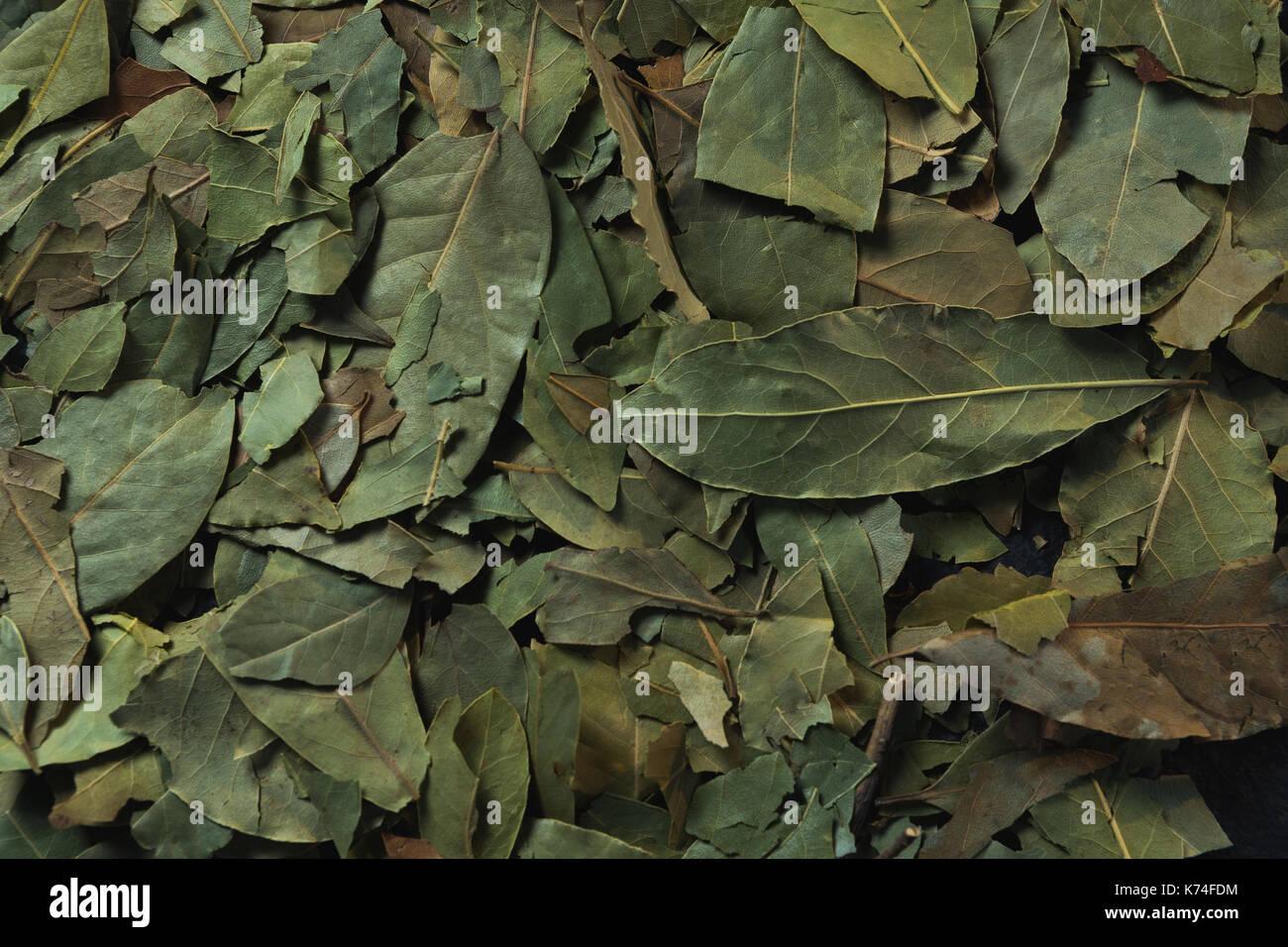 Full frame of bay leaf - Stock Image