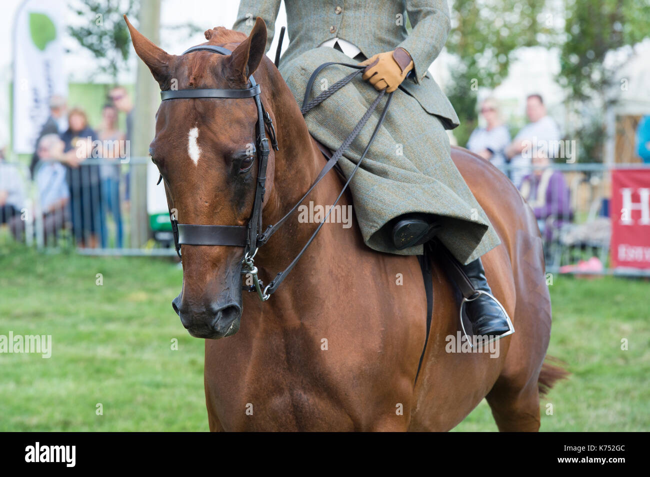 Woman riding sidesaddle on her horse at at Moreton in Marsh country show, Cotswolds, Gloucestershire, UK - Stock Image