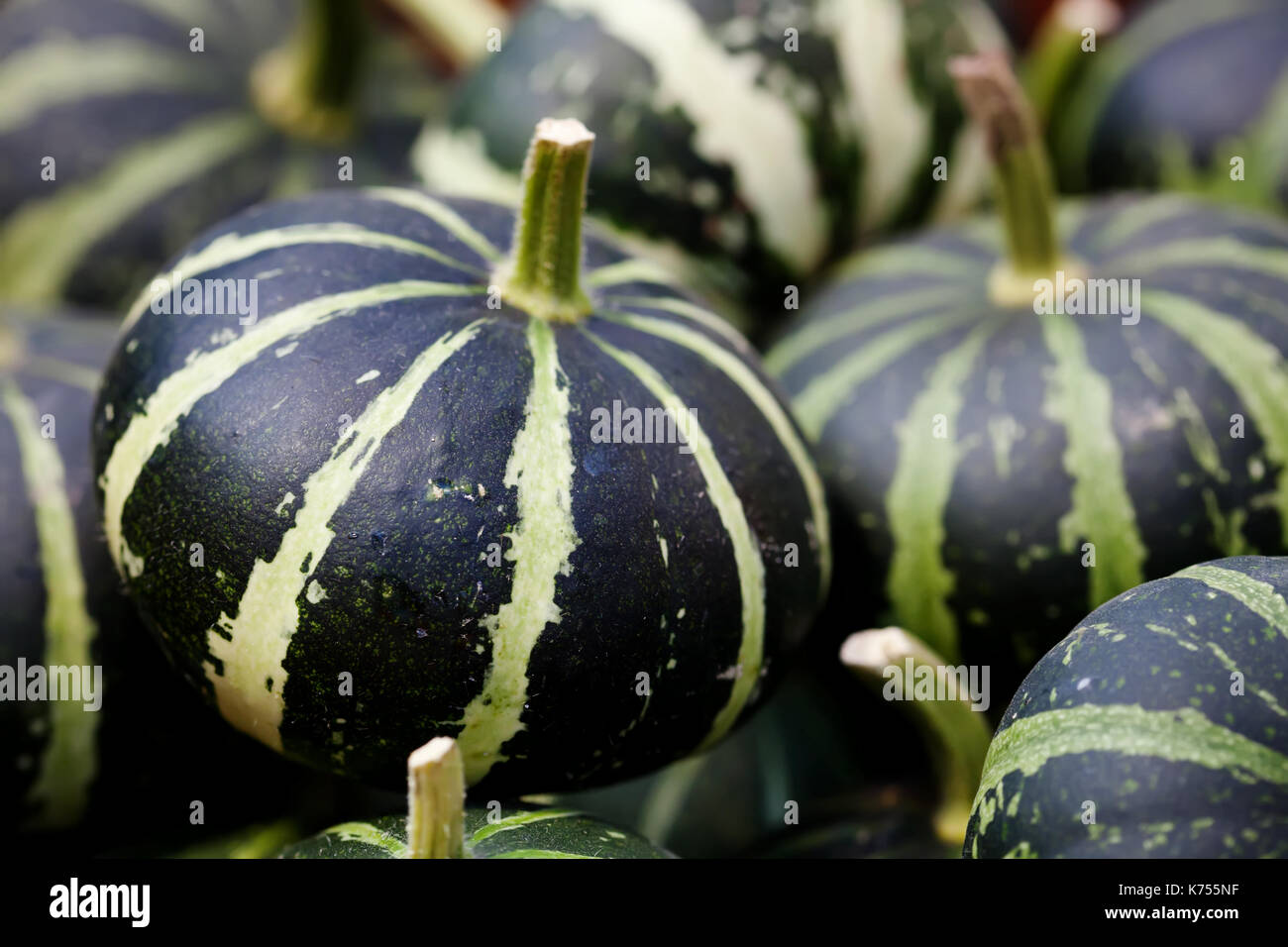 Striped green pumpkins halloween background. Organic vegetables still life. Shallow depth of field photo - Stock Image