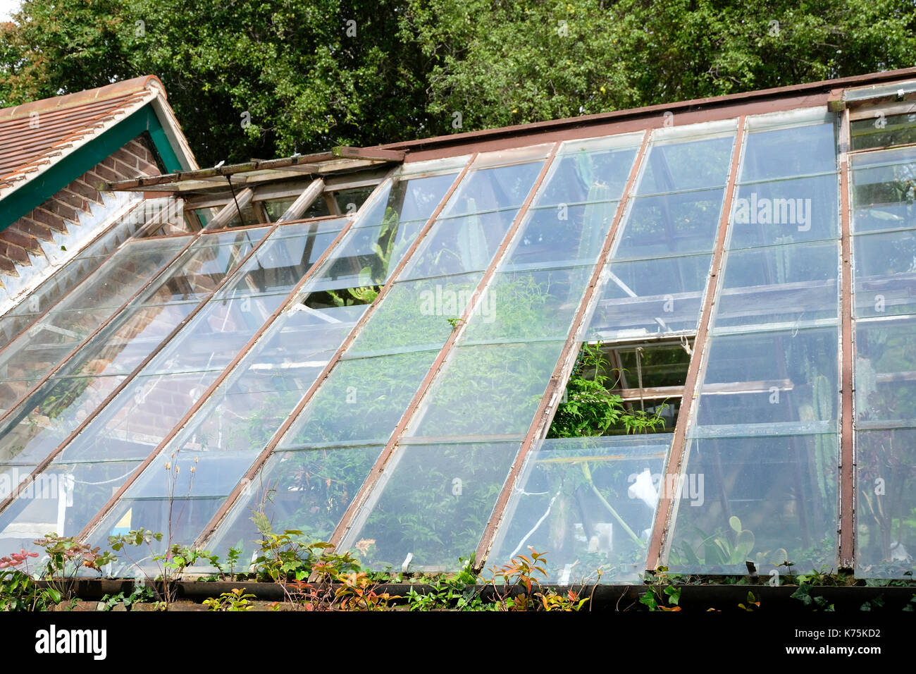 Large greenhouse with missing panes of glass in the roof - Stock Image