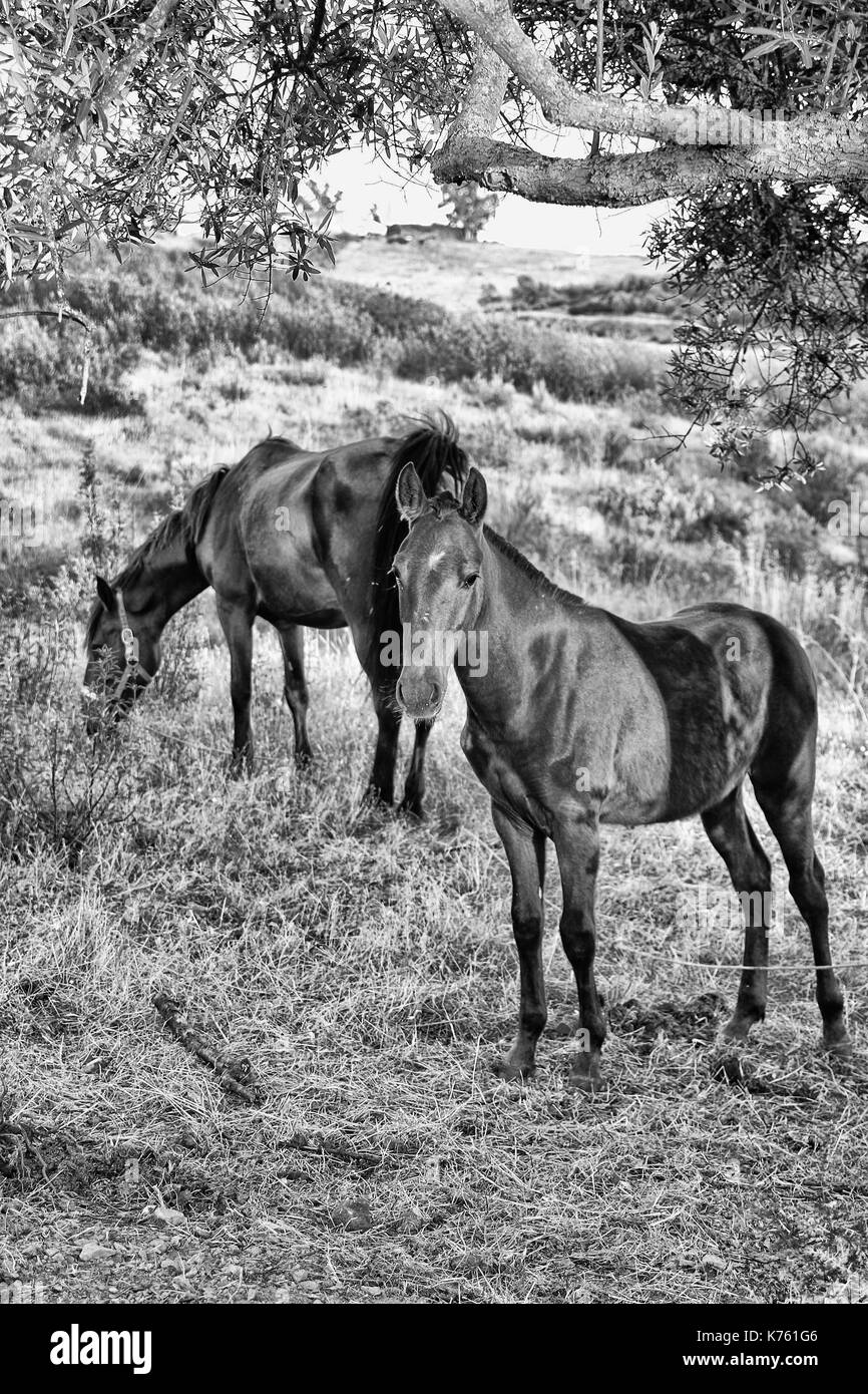 Pferd, horse , - Stock Image