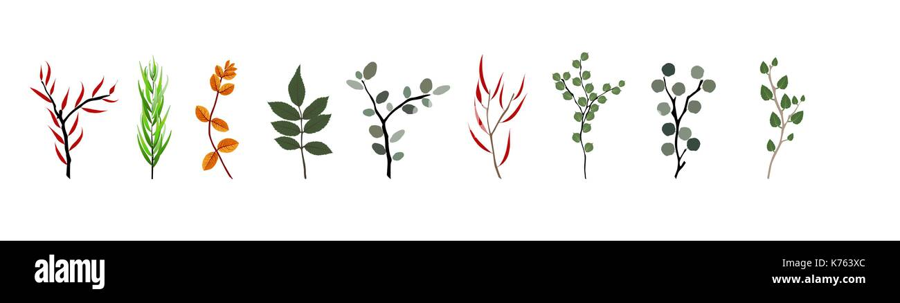 Tropical elements Agonis, Eucalyptus, Annona, Balata, Zamiokulkas, Cissus. Colorful naturalistic pictures. Vector Illustration. - Stock Vector