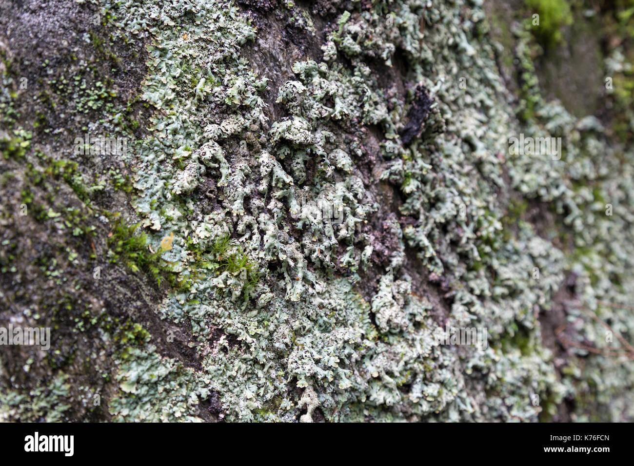 Stone Fungi Stock Photos Amp Stone Fungi Stock Images Alamy