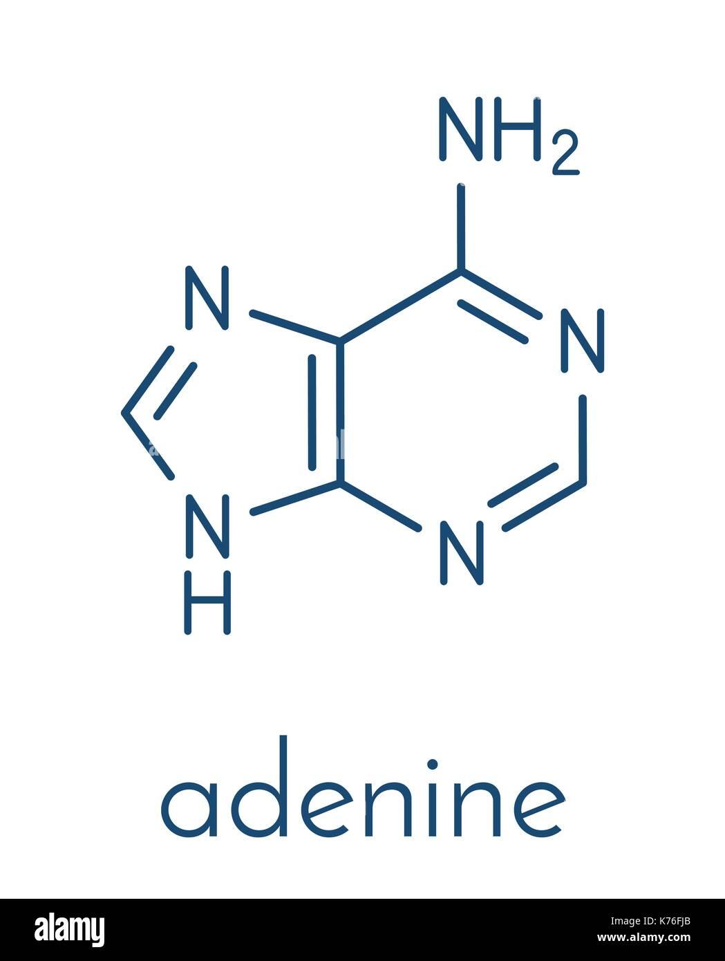 Adenine (A, Adenine) purine nucleobase molecule. Base present in DNA and RNA. Skeletal formula. - Stock Image