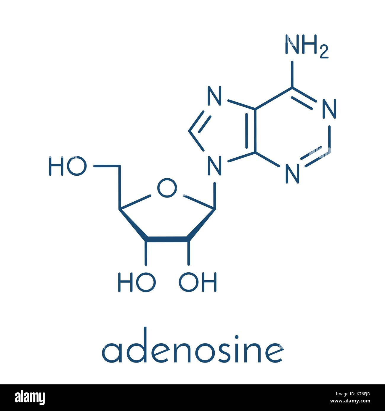 Adenosine (Ado) purine nucleoside molecule. Important component of ATP, ADP, cAMP and RNA. Also used as drug. Skeletal Stock Vector