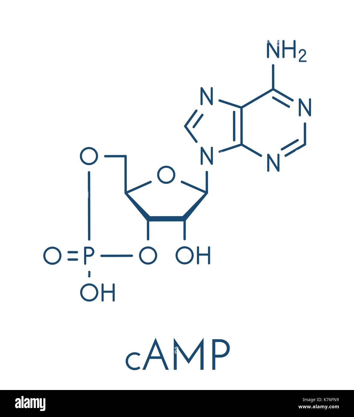 Cyclic adenosine monophosphate (cAMP) second messenger molecule. Plays role in intracellular signal transduction. Stock Vector