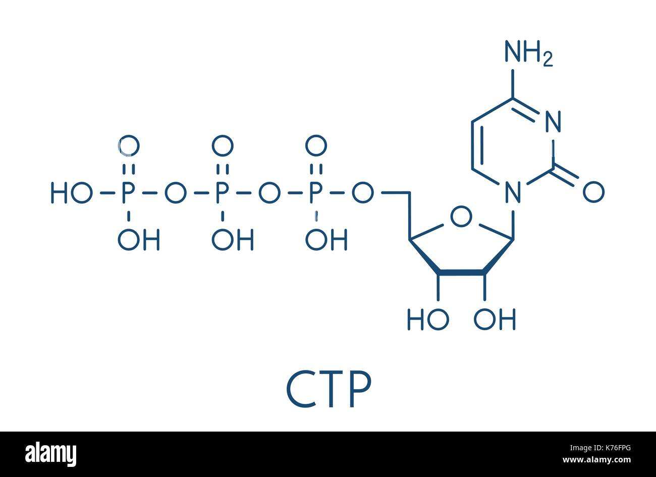 Cytidine triphosphate (CTP) RNA building block molecule. Also functions as cofactor to some enzymes. Skeletal formula. Stock Vector