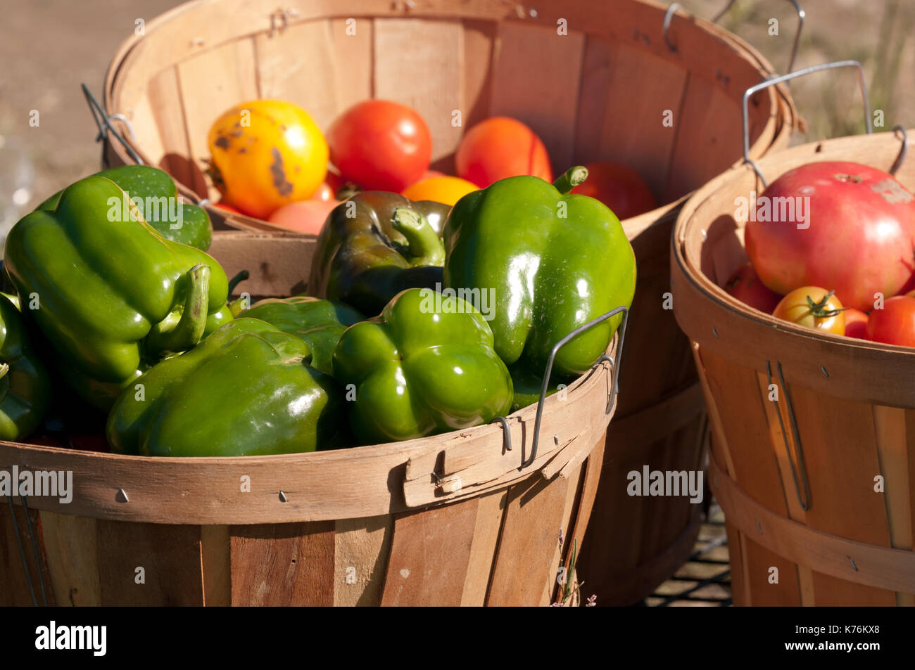 Bushel basket filled with freshly hand picked organic green peppers at a local farm. - Stock Image