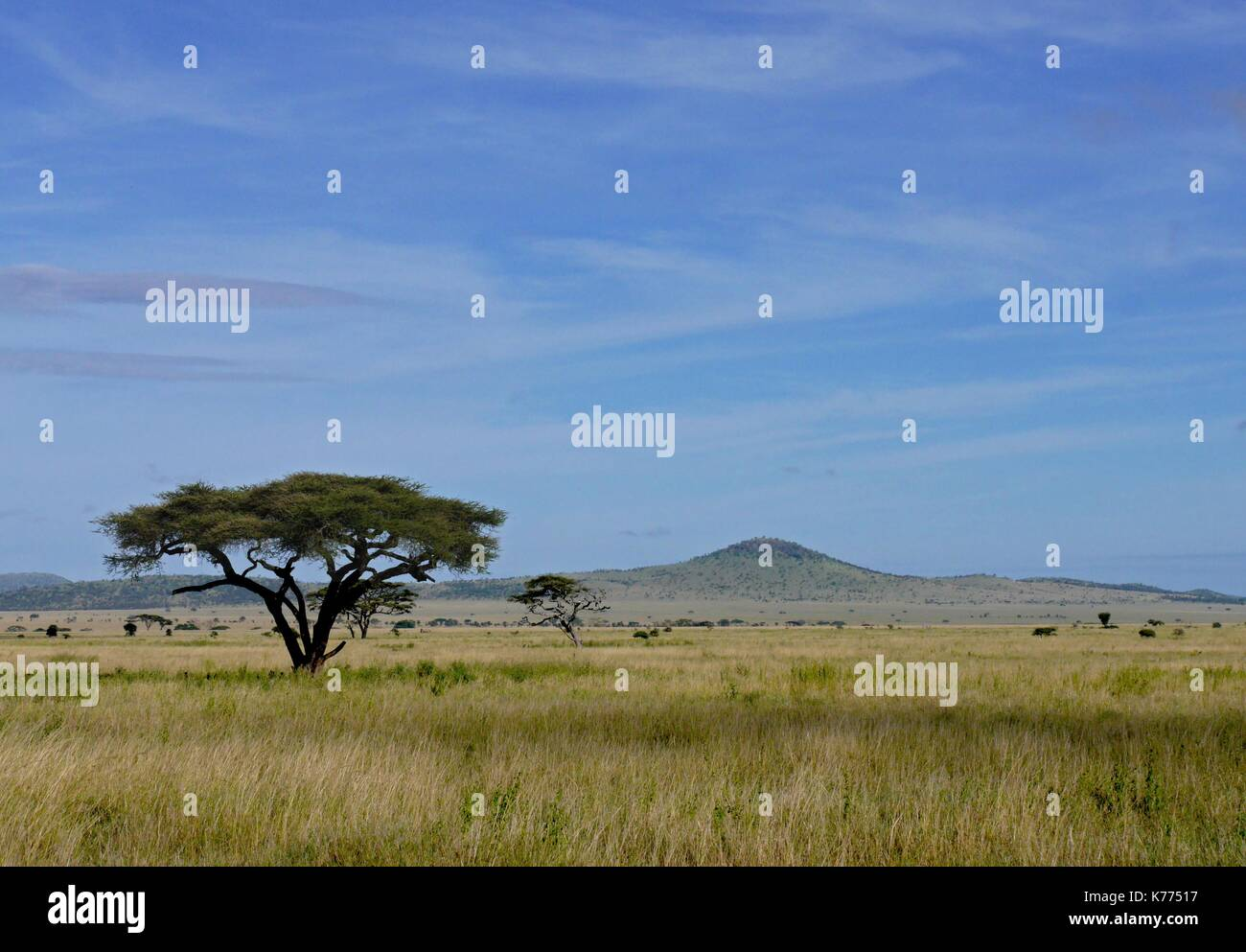 The vast open plains of the Serengeti National Park, Tanzania - Stock Image