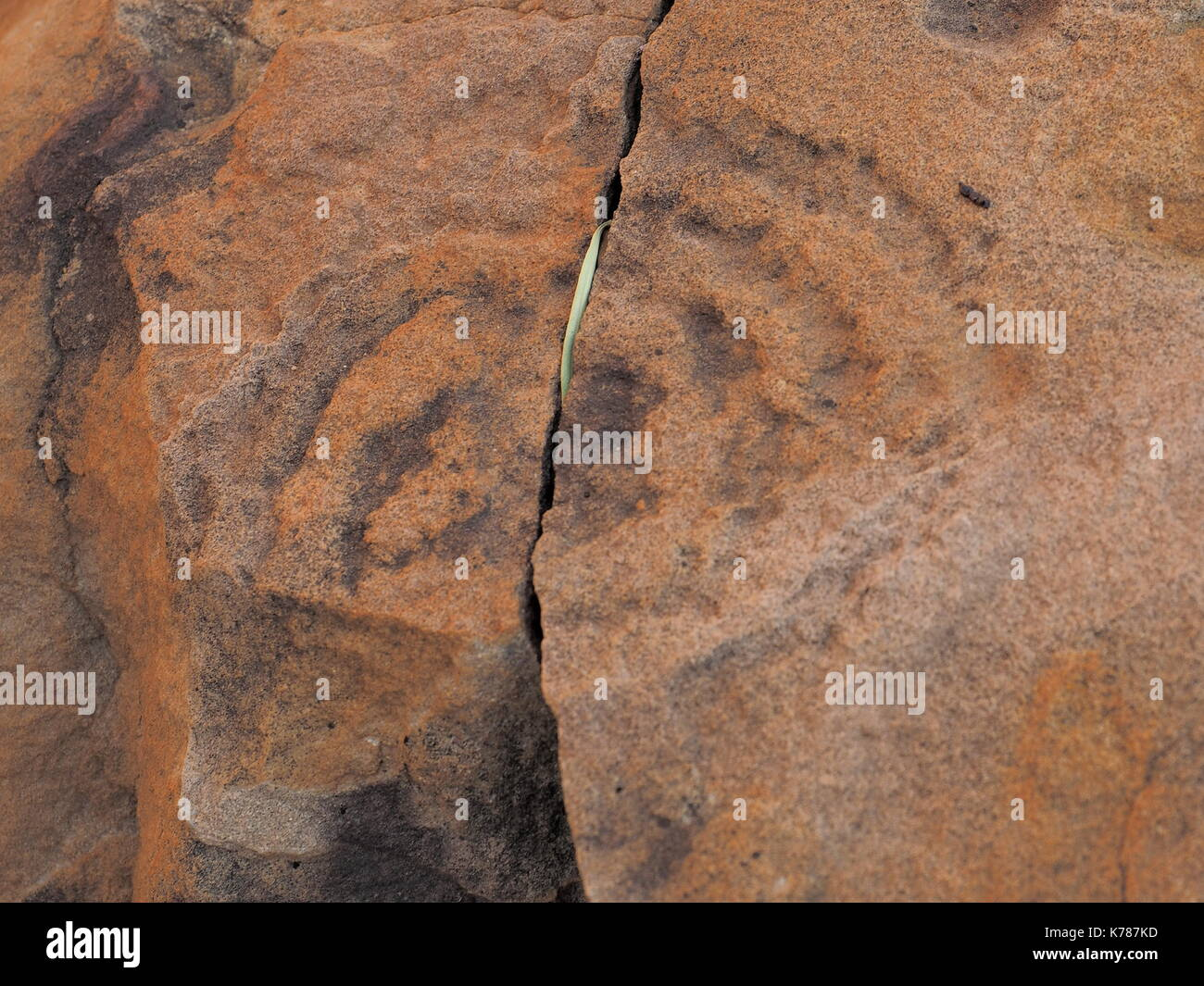 Rock carving Petroglyph on red rock surface at N'Dhala Gorge, east MacDonnell ranges near Alice Springs, Northern Territory, Australia 2017 - Stock Image