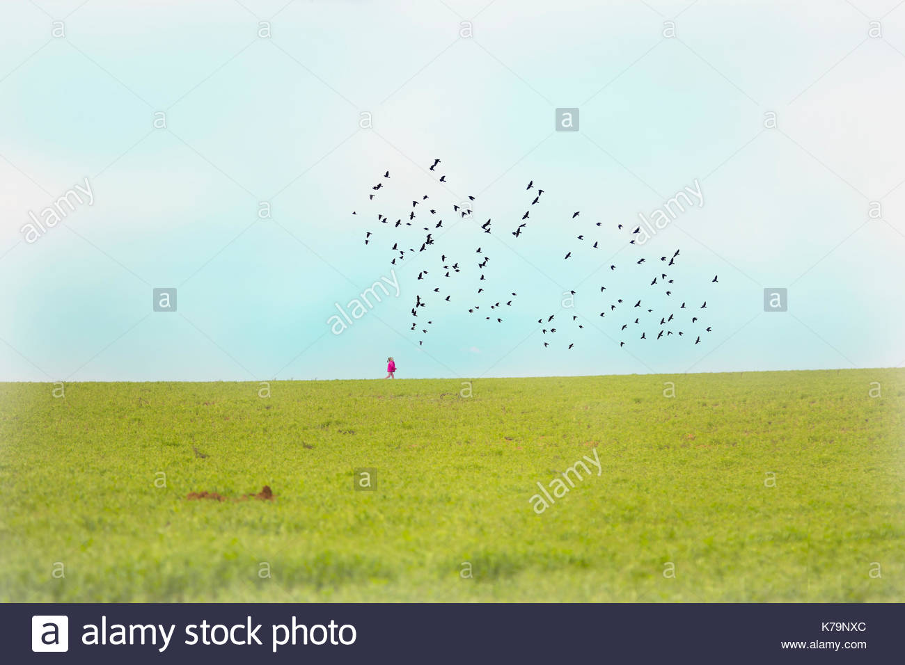 A girl in a pink coat with a flock of birds overhead - Stock Image