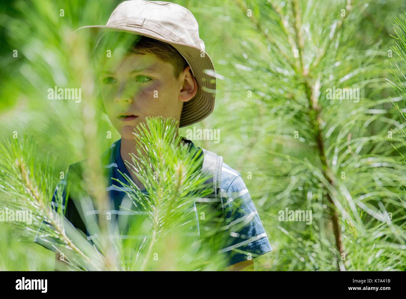 Boy exploring in woods - Stock Image