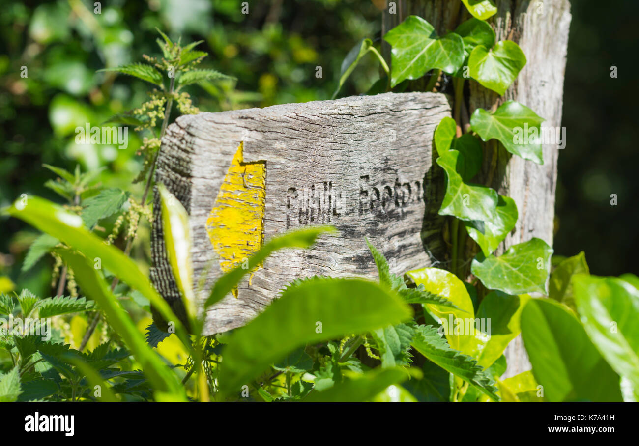 Public footpath finger post surrounded by greenery in the UK. - Stock Image